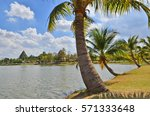 Palm Trees Beside The Pond In...