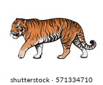 vector color walking tiger... | Shutterstock .eps vector #571334710