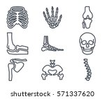 human bones skeleton line icon | Shutterstock .eps vector #571337620