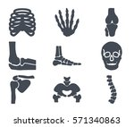 human bones skeleton silhouette ... | Shutterstock .eps vector #571340863