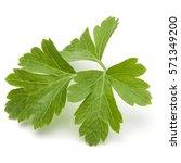 Fresh Parsley Herb Leaves ...