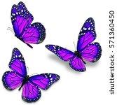 three purple monarch butterfly...   Shutterstock . vector #571360450