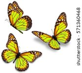 three yellow monarch butterfly... | Shutterstock . vector #571360468
