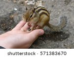 The Chipmunk Eats Seeds From...