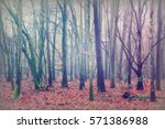 english woodland on a foggy... | Shutterstock . vector #571386988