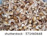 harvest honey agaric | Shutterstock . vector #571460668