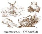 set of fresh bread and ear sack ... | Shutterstock .eps vector #571482568