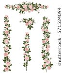 branches climbing pink rose... | Shutterstock .eps vector #571524094