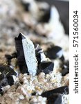 Small photo of morion mineral crystals a nice natural background
