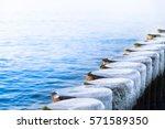 Row Of Frozen Wooden Posts In...