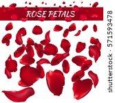 rose petals. vector... | Shutterstock .eps vector #571593478