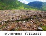 pine tree forestry exploitation ... | Shutterstock . vector #571616893