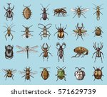 big set of insects bugs beetles ... | Shutterstock .eps vector #571629739