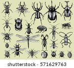Big Set Of Insects Bugs Beetles ...