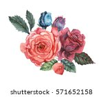 hand painted watercolor... | Shutterstock . vector #571652158