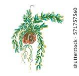 doodle art garden terrariums... | Shutterstock .eps vector #571757560