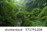 Subtropical Forest In Bali ...