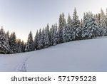 pine trees in mountains in... | Shutterstock . vector #571795228