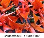 bustard teak  bengal kinu | Shutterstock . vector #571864480
