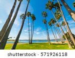 palm trees in san diego... | Shutterstock . vector #571926118