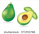 avocado vector   Shutterstock .eps vector #571952788