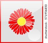 Illustration Chamomile Flowers.