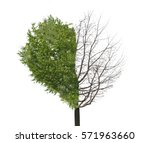 lonely tree on white background | Shutterstock . vector #571963660