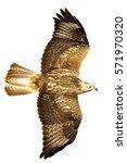 flying predator. isolated on... | Shutterstock . vector #571970320