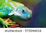 Lizard Close Up Macro Animal...