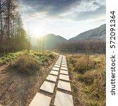 sunset in the woods corridor | Shutterstock . vector #572091364