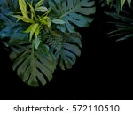 tropical forest plants green... | Shutterstock . vector #572110510
