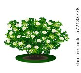 bush with green leaves and...   Shutterstock .eps vector #572133778