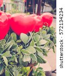 Small photo of Retro color/ Red Heart Balloons with creeper plant (Dischidia nummularia Variegata)