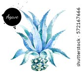 watercolor hand drawn agave... | Shutterstock . vector #572167666