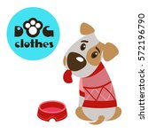 dog in clothes. the jack... | Shutterstock .eps vector #572196790