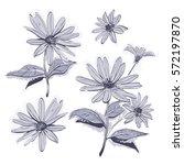 vector drawing flowers hand... | Shutterstock .eps vector #572197870