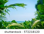 frame of tropical green palm... | Shutterstock . vector #572218120