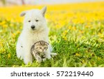Puppy Hugging A Tabby Kitten O...