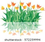 tulips. grass and spring... | Shutterstock .eps vector #572259994