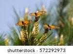 three monarch butterflies... | Shutterstock . vector #572292973