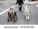 Stock photo new york city dog walker animals and their owners on the streets of the big city the dogs on the 572299789