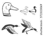 Set Of Wild Ducks Icons...