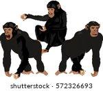 Black Chimpanzees In Different...
