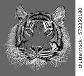 illustration of a tiger face.... | Shutterstock .eps vector #572350180