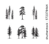 conifers sketch set  hand... | Shutterstock .eps vector #572378464