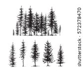 Conifers Sketch Set  Hand...
