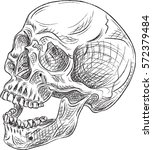 side sketch skull isolated on... | Shutterstock .eps vector #572379484
