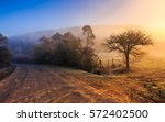 asphalt road in blue shade of a trees in mountainous rural area at foggy golden sunrise - stock photo