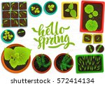 vector set of flat seedlings of ... | Shutterstock .eps vector #572414134
