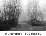 english woodland on a foggy... | Shutterstock . vector #572506960